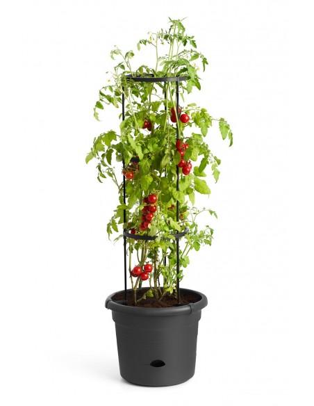 green basics tomaten pot