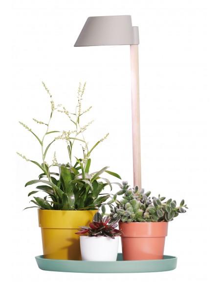 plant light care