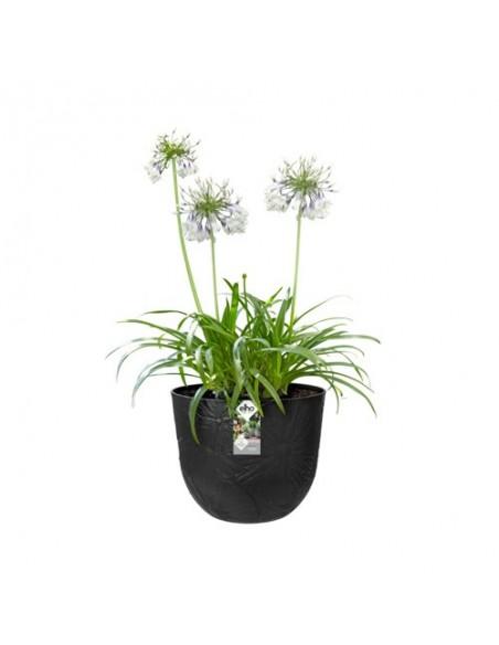 fuente lily round