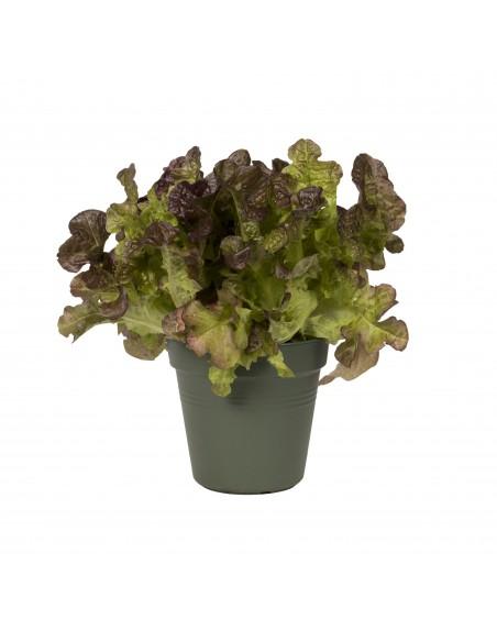 green basics growpot