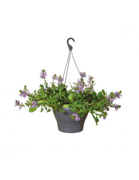 corsica hanging basket