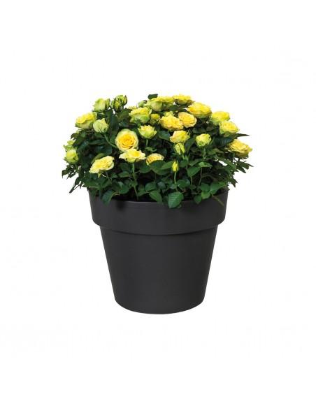green basics top planter